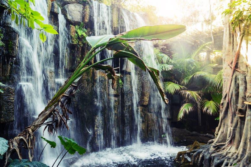 Tropical - jungle park in Palma, Mallorca royalty free stock photography