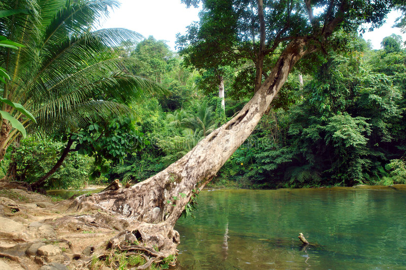 Download Tropical Jungle With Pond. Stock Image - Image: 1705441