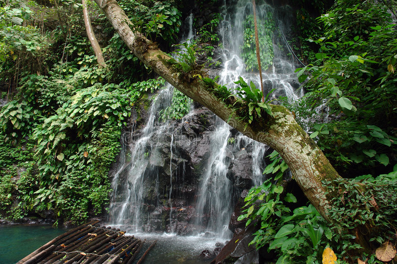 Tropical jungle with tree, raft and waterfall stock image