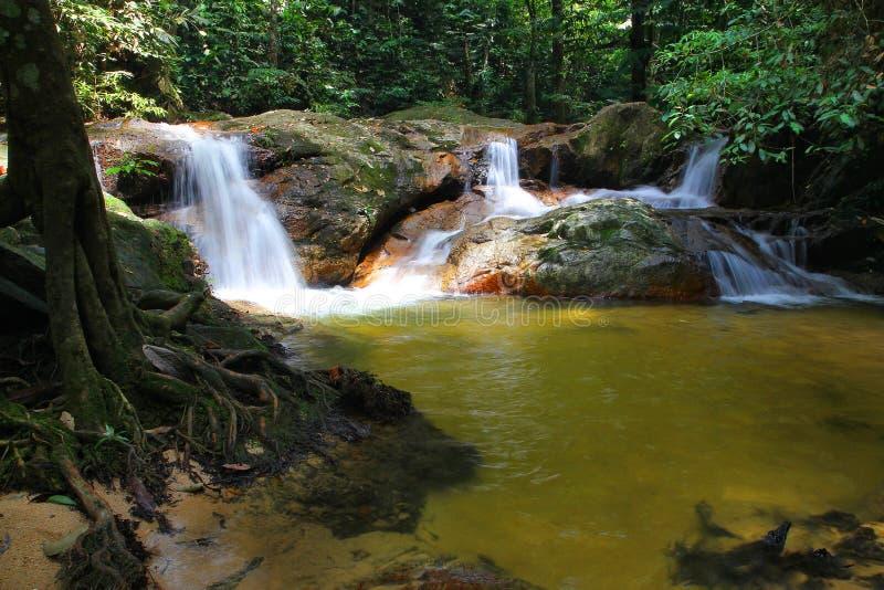 Download Tropical jungle waterfalls stock photo. Image of natural - 31376134