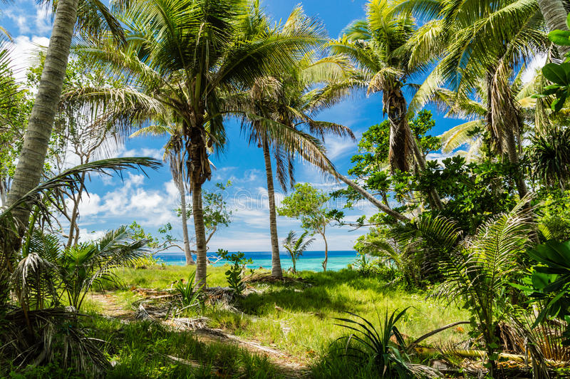 Tropical jungle and wonderful sea stock images