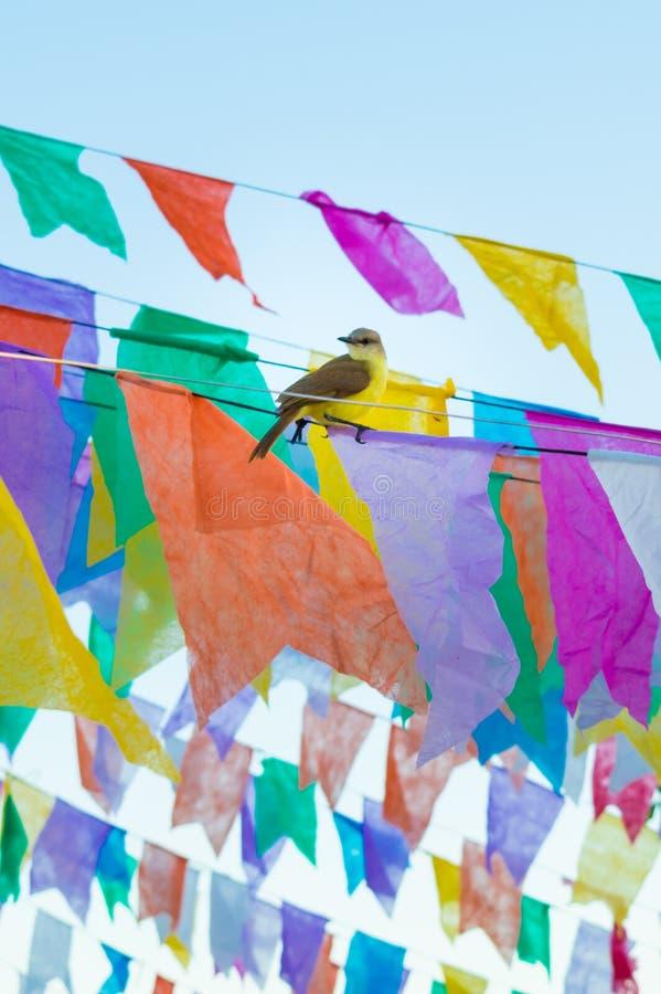 Tropical kingbird Tyrannus melancholicus on flags used for decoration at the June Festivals aka festas de Sao Joao. Popular annual Brazilian celebration stock photos