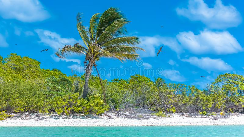 Tropical lagoon, in French Polynesia royalty free stock photography