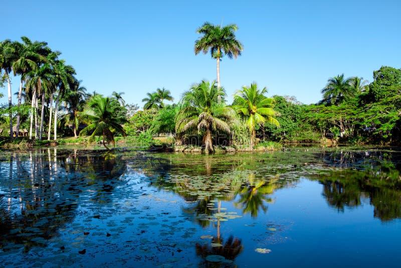 Tropical lake nearby crocodile farm at Playa Larga, Cuba royalty free stock photos