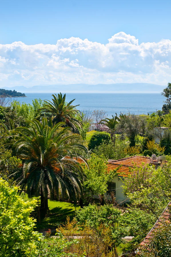 Download Tropical Landscape stock photo. Image of garden, green - 24663838