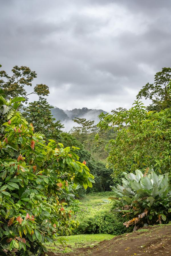 Tropical landscape at Arenal Monoa resort. With misty mountains in the background stock photos