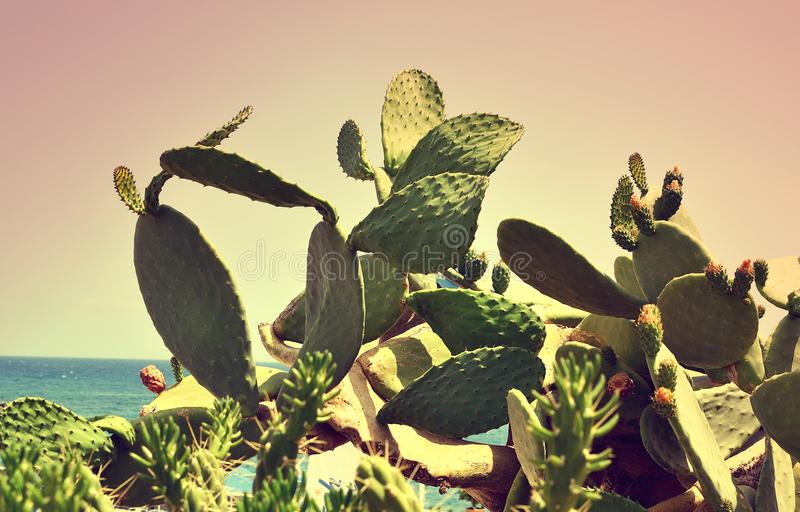 Tropical Landscape Cactus Holiday Travel Background Journey Summer Concept Flowers. Crete Island Greece Toned Photo Retro Vintage royalty free stock photography