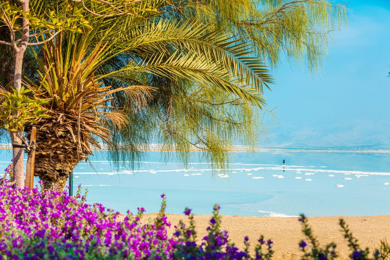 Dead Sea shore. Palm trees on the beach stock images