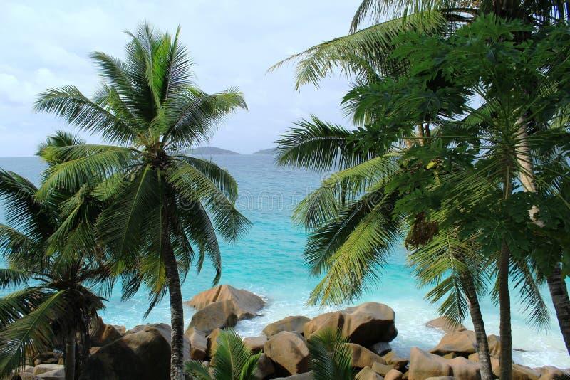 Download Tropical landscape stock image. Image of green, leaf - 36668681