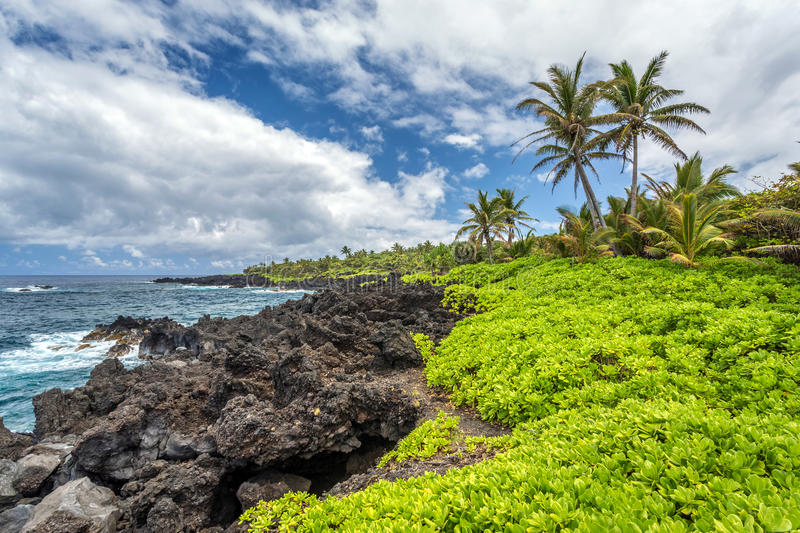 Tropical Landscape On Maui stock photography