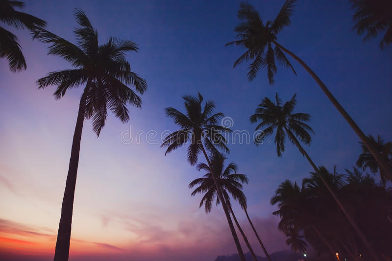 Tropical landscape by night, silhouettes of palm trees. On the beach with sunset sky royalty free stock photo