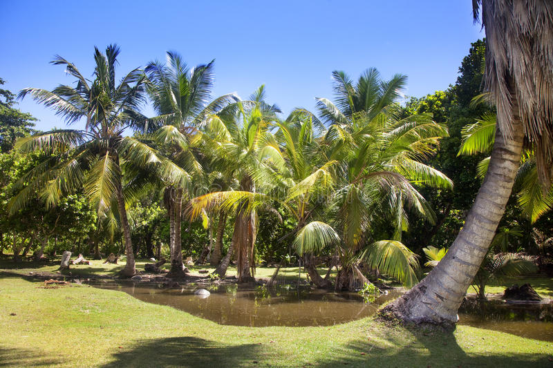 Download Tropical Landscape With Palm Trees Stock Photo - Image of beautiful, anse: 39503368