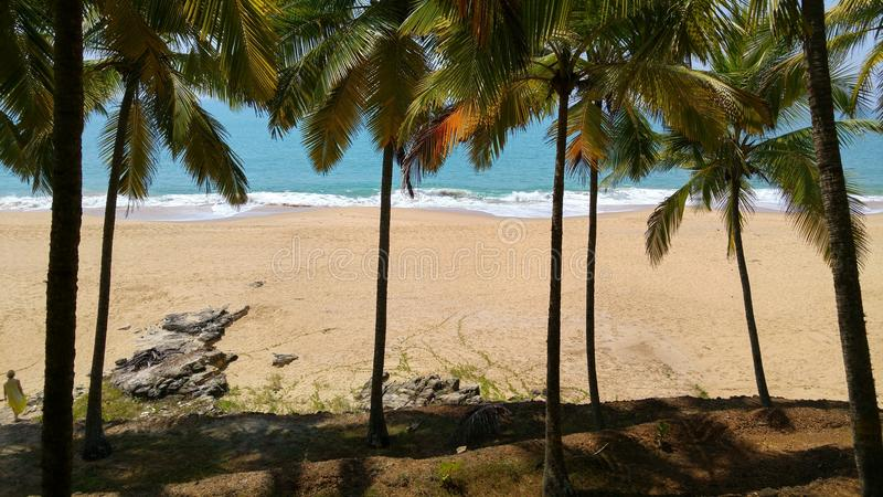 Tropical landscape with palm trees at ocean background. Palm trees at the ocean coast of India Kerala royalty free stock photo