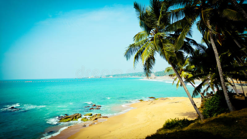 Tropical landscape with palm trees at ocean background. Palm trees at the ocean coast of India Kerala royalty free stock photos