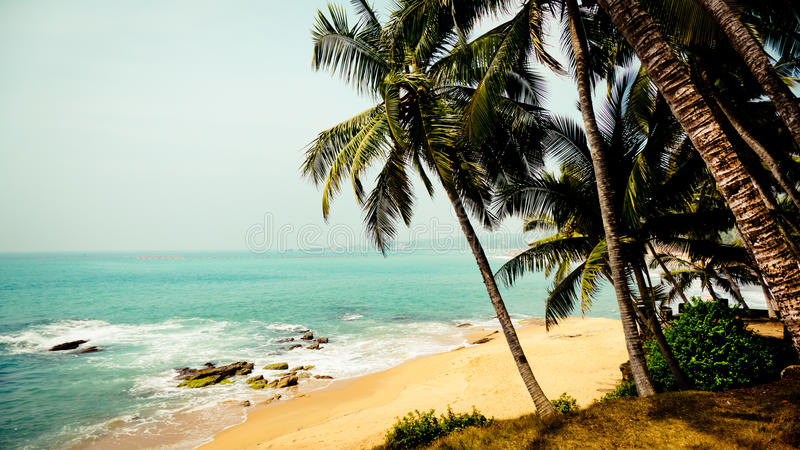 Tropical landscape with palm trees at the ocean coast at background royalty free stock photos