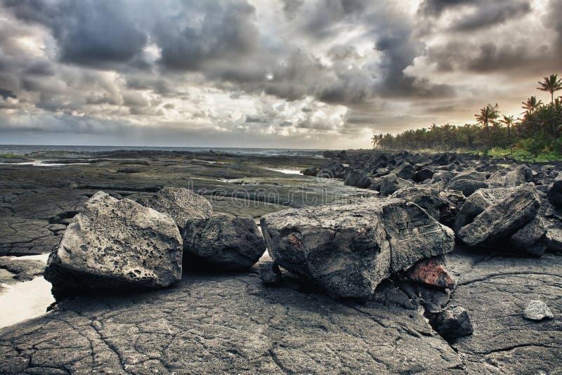 Tropical lava beach and palm trees stock photos