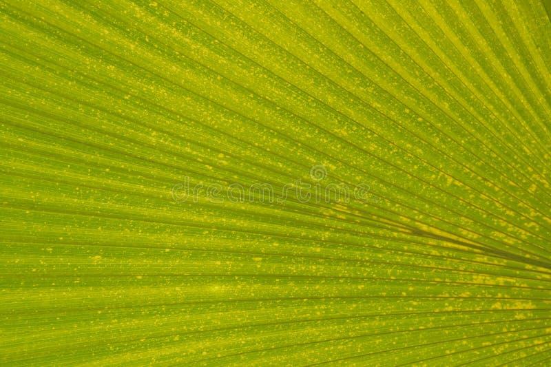 Download Tropical Leaf stock photo. Image of wallpaper, leaf, flower - 2344838