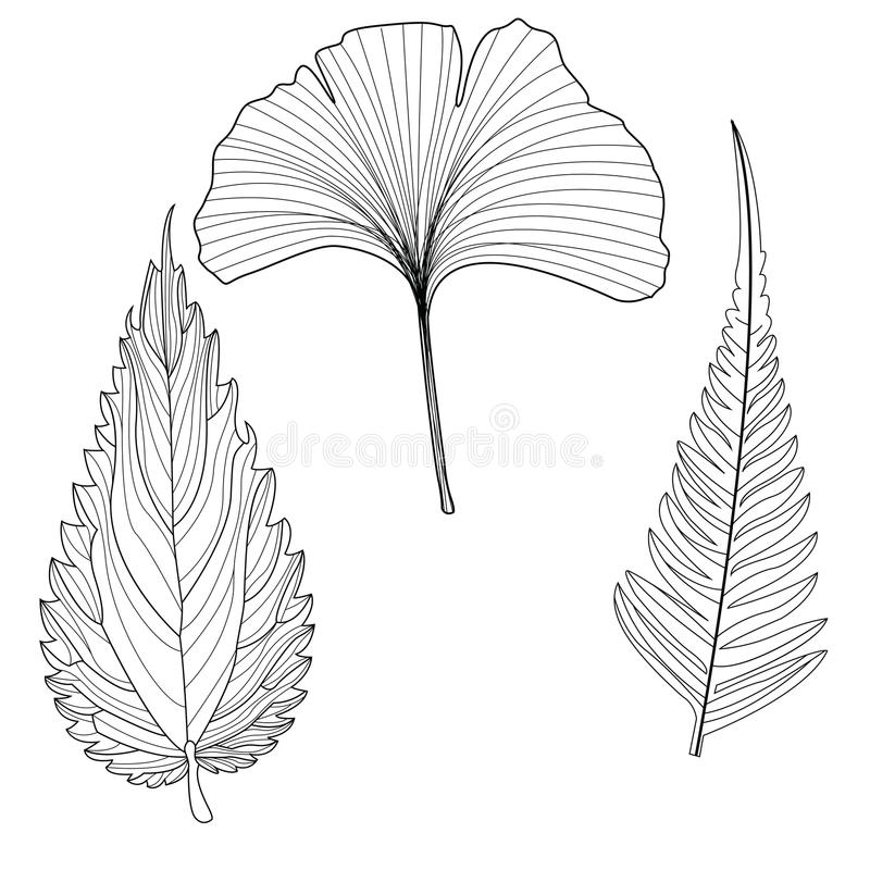Tropical Leaf stock illustration