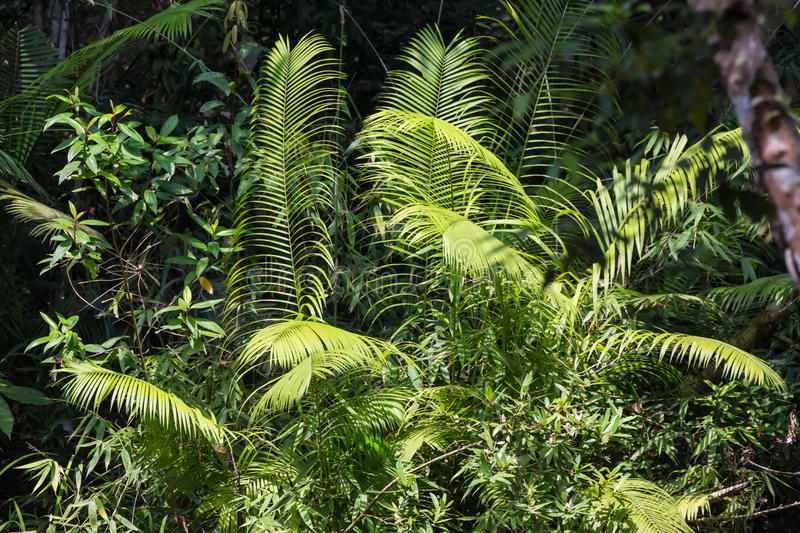 Tropical leafs. Close up (Cambodia royalty free stock images