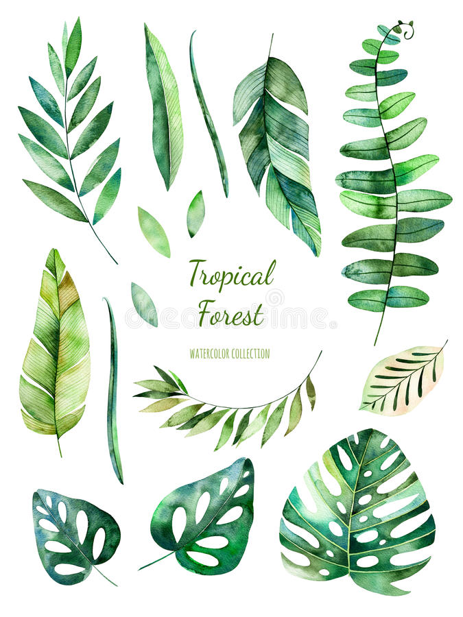 Free Tropical Leafy Collection. Handpainted Watercolor Floral Elements. Stock Photo - 90117310