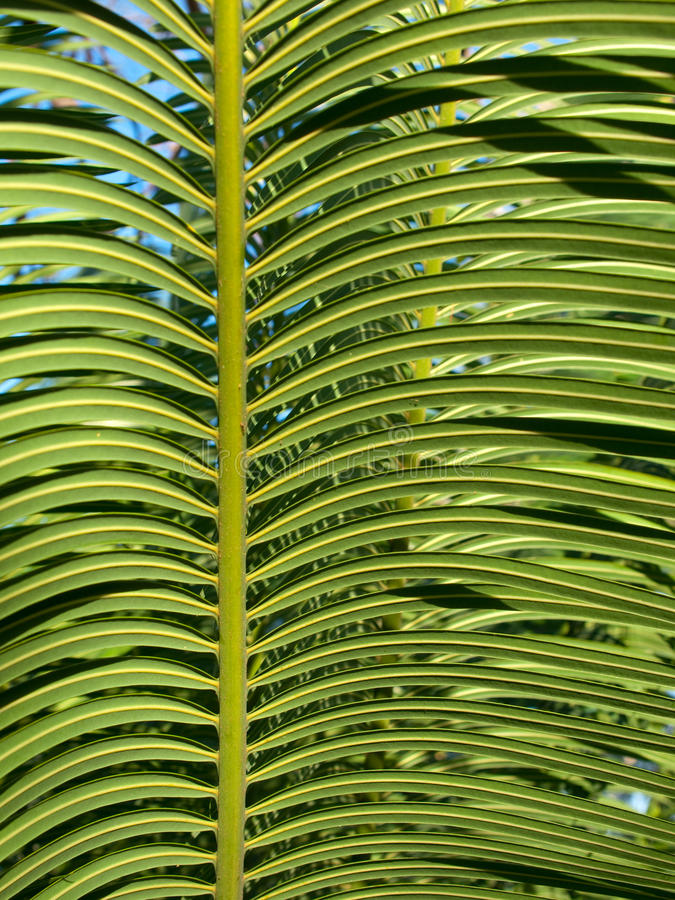Download Tropical Leaves Royalty Free Stock Photos - Image: 12118458