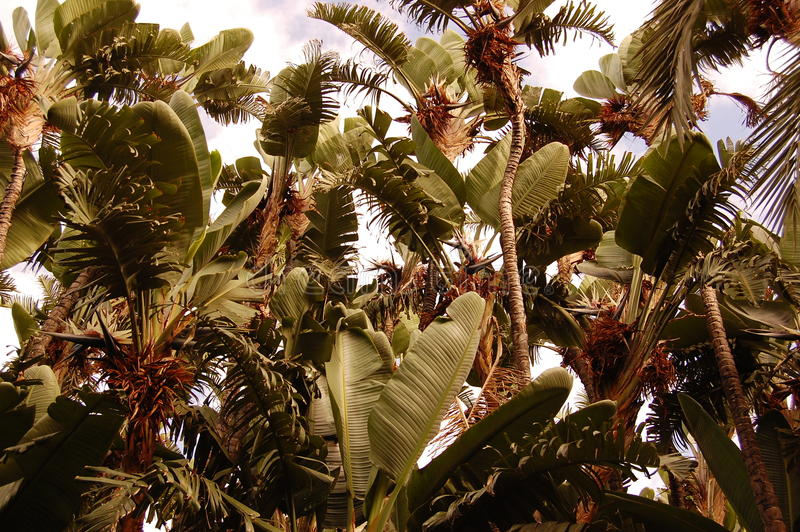 Download Tropical leaves stock photo. Image of environment, green - 22086592