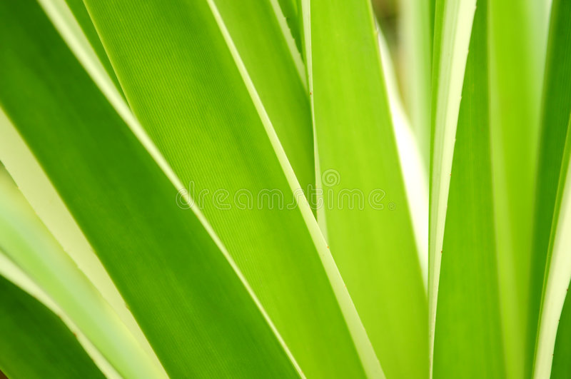 Tropical leaves stock image