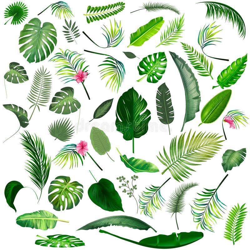 Free Tropical Leaves Big Collection. Vector Isolated Elements On The White Background Royalty Free Stock Image - 144430766