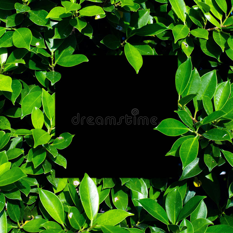 Tropical and leaves with Blank paper card note. stock image