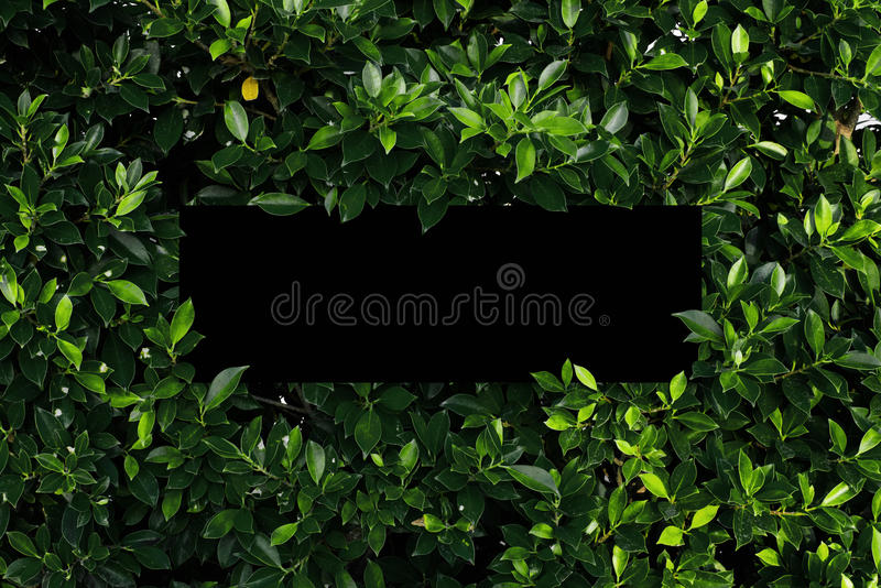 Tropical and leaves with Blank paper card note. stock images