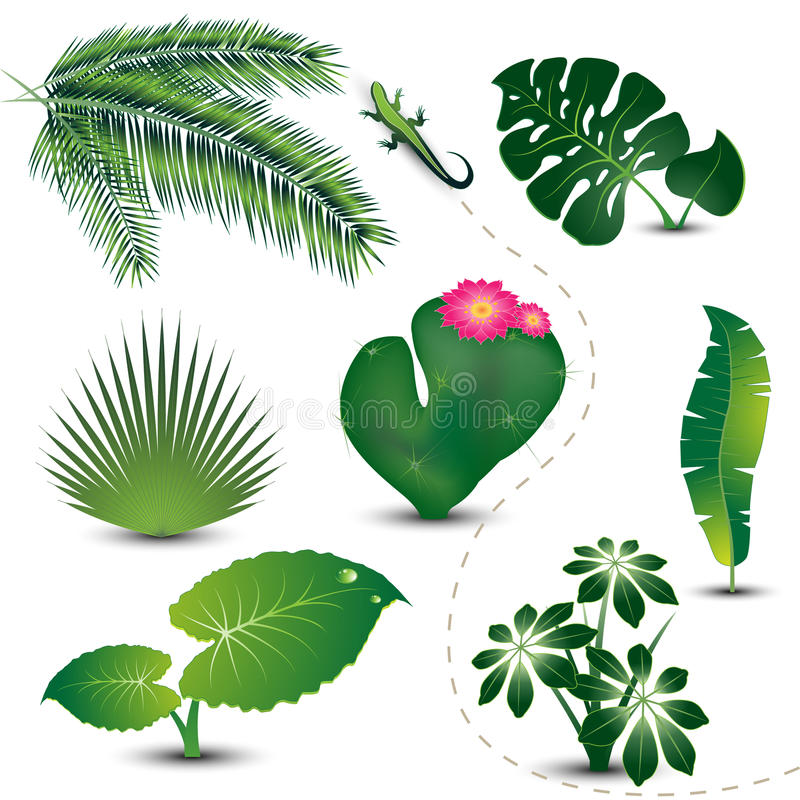 Free Tropical Leaves Collection Stock Photos - 10057153