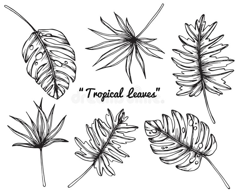 Tropical leaves drawing and sketch. stock illustration
