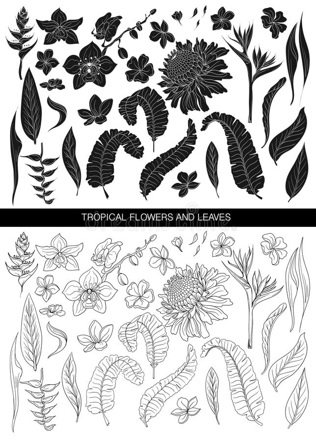 Tropical leaves and flowers silhouette and line big set. Isolated on white background royalty free illustration