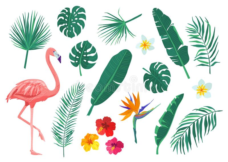 Tropical leaves, flowers vector illustration set. Cartoon flat element with monstera, hibiscus, frangipani, flamingo stock images