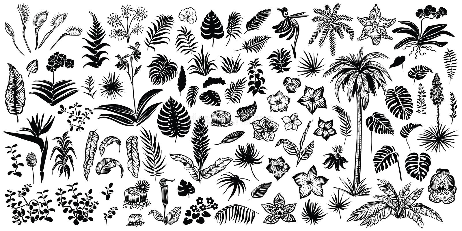 Tropical leaves and flowers, vector line and silhouette sketches. Big collection of exotical flora. vector illustration