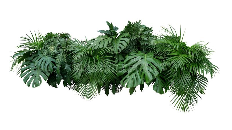 Tropical leaves foliage plant bush floral arrangement nature backdrop isolated on white background, clipping path included. royalty free stock image