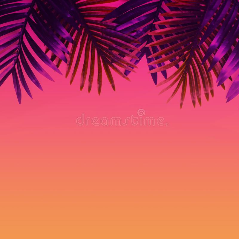 Tropical leaves foliage plant close up with color copy space background.Nature and summer concepts ideas. For decoration design stock images