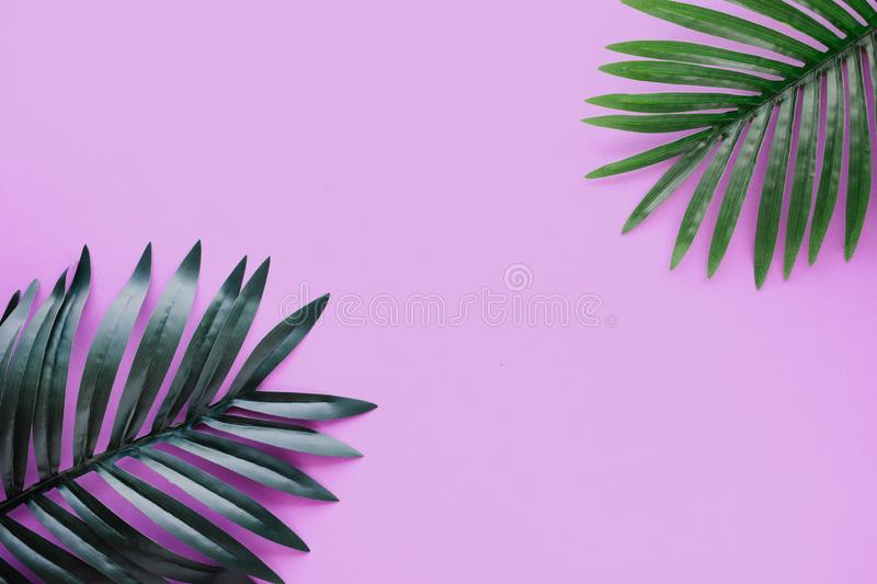 Tropical leaves foliage plant close up with color copy space background.Nature and summer concepts ideas. For decoration design royalty free stock image