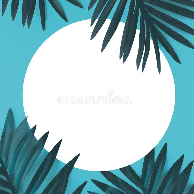 Tropical leaves foliage plant close up with color copy space background.Nature and summer concepts ideas vector illustration