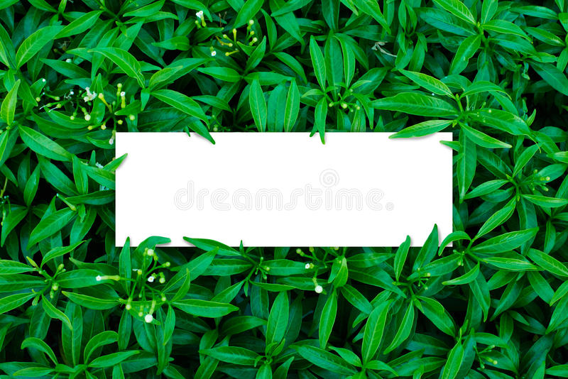 Tropical and leaves with green paper card note. stock photos