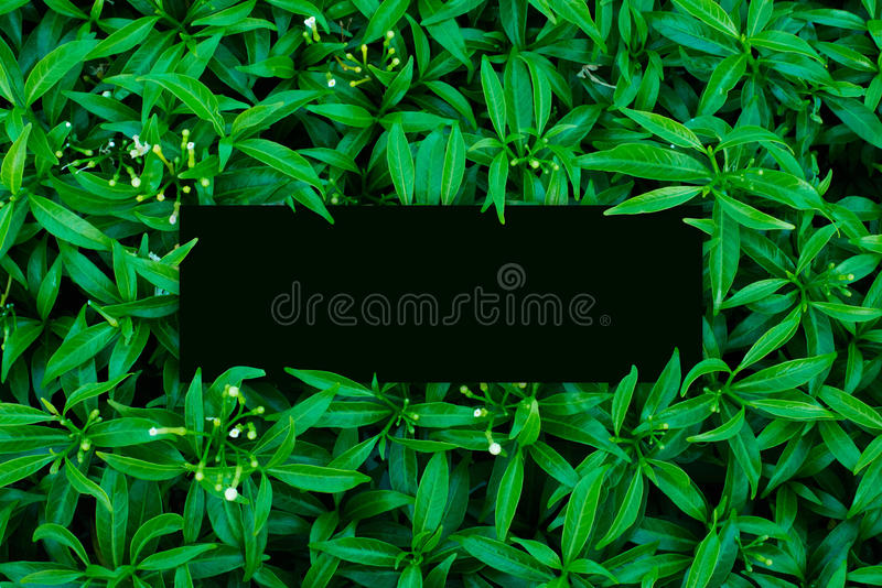 Tropical and leaves with green paper card note. stock images