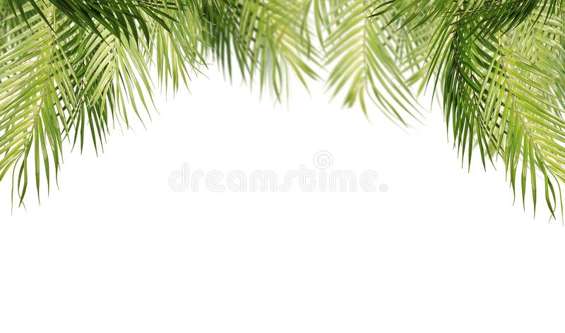 Tropical leaves, isolated on white background royalty free stock photos