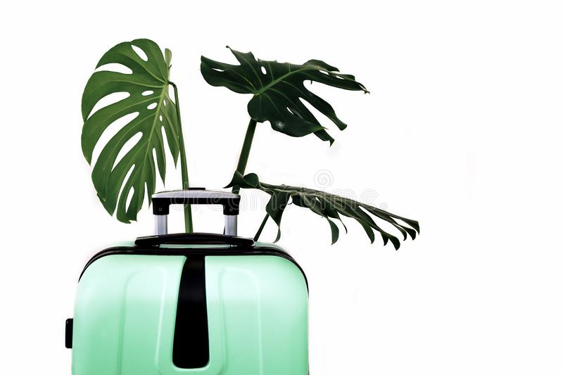 Tropical leaves luggage big bag green white background pot travel suitcase baggage black isolated. Green travel suitcase on white background with green tropical royalty free stock images