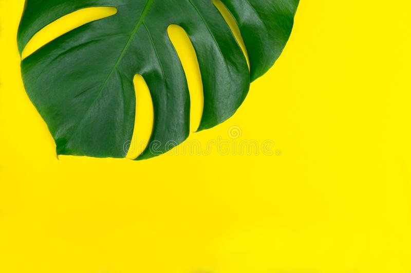 Tropical leaves Monstera flower on a yellow background. Creative arrangement of these tropical leaves on a bright yellow backgroun stock image