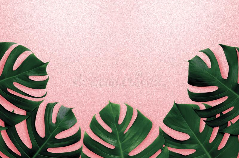 Tropical leaves monstera,green leaf,shadow on pink summer background.Flat lay,top view pastel color illustration tropical exotic l. Eaf,design,invitation stock images