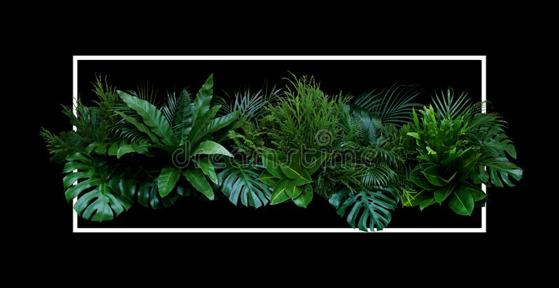 Tropical leaves Monstera, palm, fern, pine, rubber plant foliage plants bush floral arrangement nature backdrop with white frame. On black background royalty free stock images