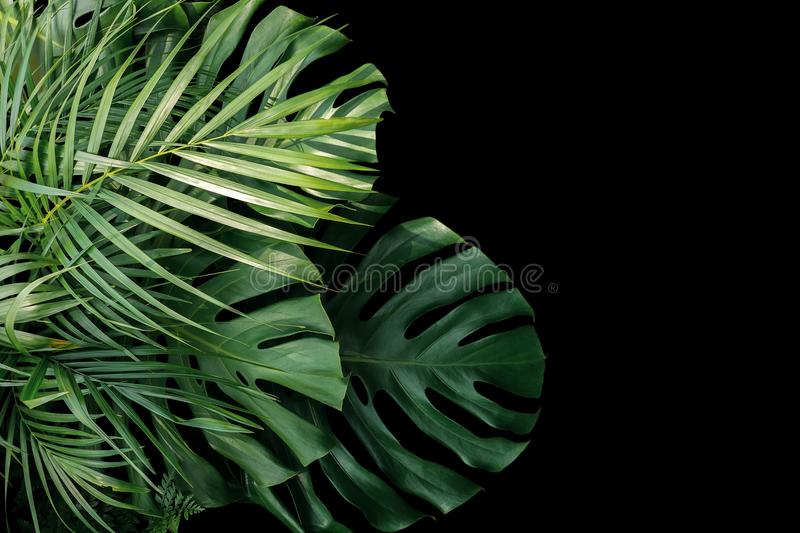 Tropical leaves Monstera philodendron, fern and palm leaves ornamental foliage plants flora arrangement nature backdrop on black. Background royalty free stock photography