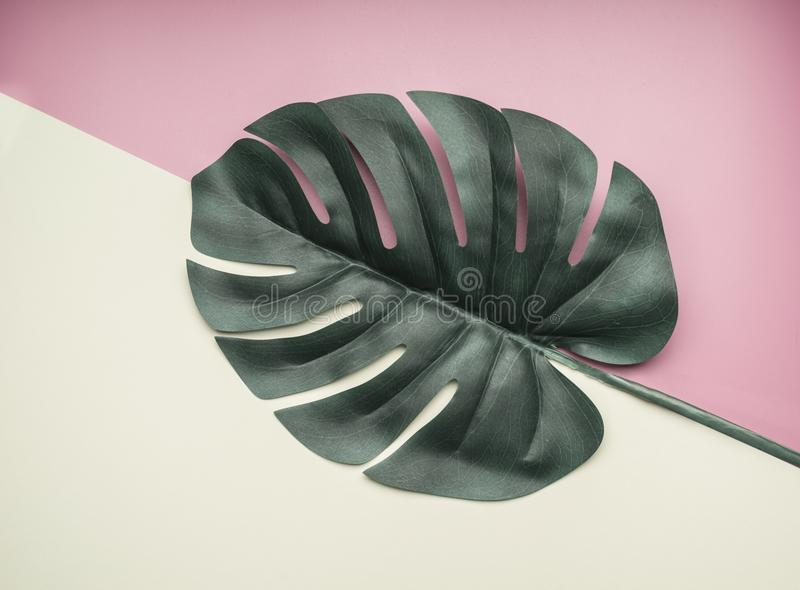 Tropical leaves monstera on a pinkish white summer background, toned, flat lay stock photography