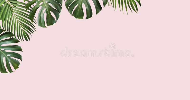 Tropical leaves monstera and yellow palm on pink background royalty free stock images