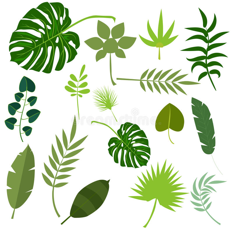 Tropical leaves palm summer exotic jungle green leaf vector illustration vector illustration